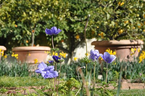 Flowers in the Villa Borghese, one of my favorite parks in Rome