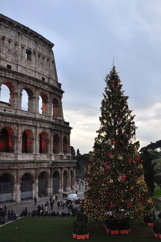 Christmas tree at the Colosseum, Rome