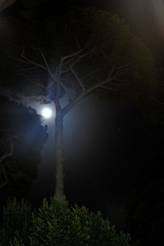 Tree at night in Rome