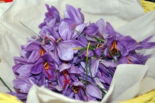 Saffron at Fontanaro in Umbria